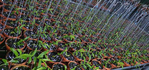 Ông chủ vườn lan ở Tuyên Quang chia sẻ cách chăm sóc hoa lan