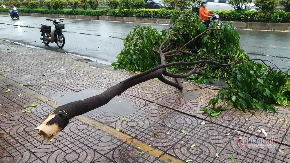 Mưa ngập đổ cây trong đêm, sáng ra đường kẹt cứng