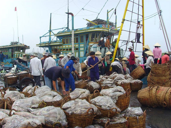 Lack of quality human resources affect Vietnam's fisheries activities