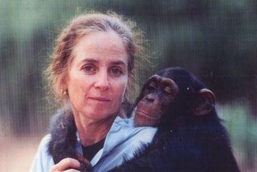 Người phụ nữ ở trong rừng 6 năm để dạy tinh tinh sống hoang dã
