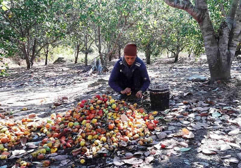 Hàng ngoại đổ về, đặc sản Việt giảm giá kỷ lục, dân kêu lỗ nặng