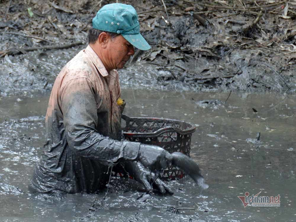 Mùa tát đìa bắt cá đồng, đem nướng trui thơm nức ở miền Tây