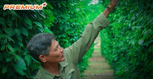 """Bài học lên đỉnh, xuống đáy của """"vàng đen"""" Việt Nam"""