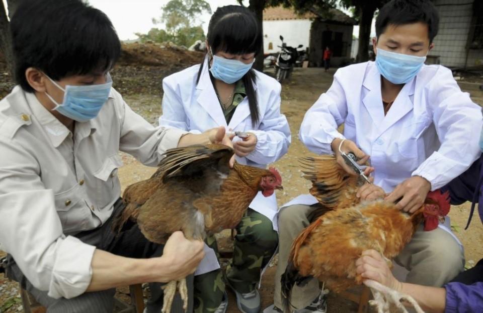 Tuyên Quang không bị xâm nhiễm dịch bệnh gia cầm do công tác kiểm soát, cách ly tốt