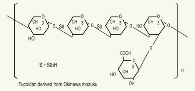Món quà tuyệt vời cho sức khỏe từ Fucoidan có nguồn gốc từ tảo nâu
