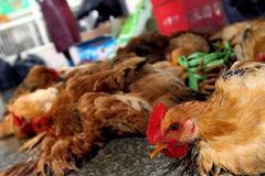 Hà Tĩnh nỗ lực khống chế và kiểm soát dịch cúm gia cầm H5N6
