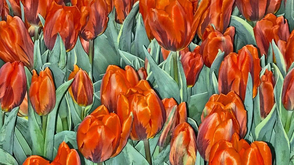 Sốt lan đột biến, giấc mộng 'ôm lan đổi đời' và lời cảnh báo 'bong bóng tulip' gần 400 năm trước