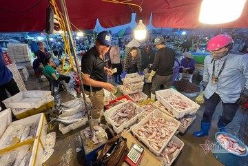 Hustle and bustle of sleepless nights in Ha Long fish market