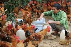 Hướng đi mới từ liên kết chăn nuôi gà sinh học tại Bắc Giang