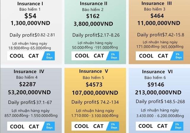 Bỏ tiền tỷ, vay nặng lãi đầu tư Coolcat: Người chơi 'chết đứng' khi sàn sập