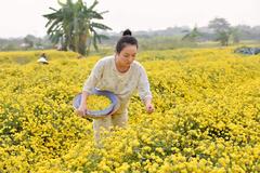 'Nàng thơ' Nam Định truyền cảm hứng làm đẹp từ thiên nhiên