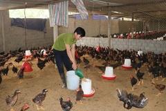 Phòng, ngừa dịch bệnh, An Giang khuyến khích nông dân chuyển sang nuôi gà sinh học