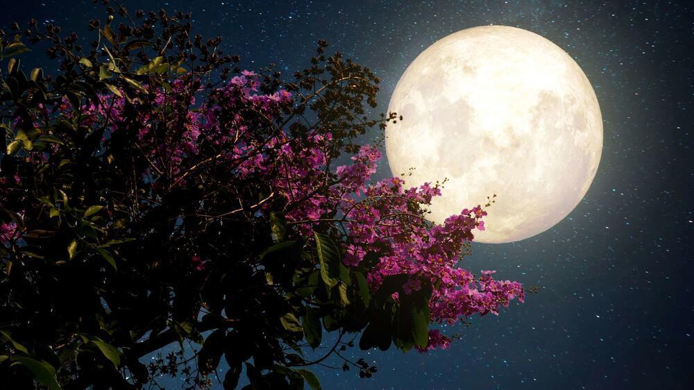 """""""Siêu trăng hồng"""" sẽ xuất hiện vào ngày mai"""