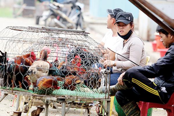 Kiểm soát vận chuyển gia cầm bẩn để phòng ngừa virus cúm H7N9
