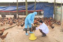 Thanh Hóa: Không để dịch bệnh xảy ra, đảm bảo nguồn cung thực phẩm và an toàn thực phẩm