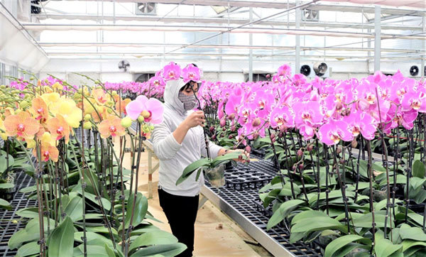 Flower and ornamental plant production on the rise