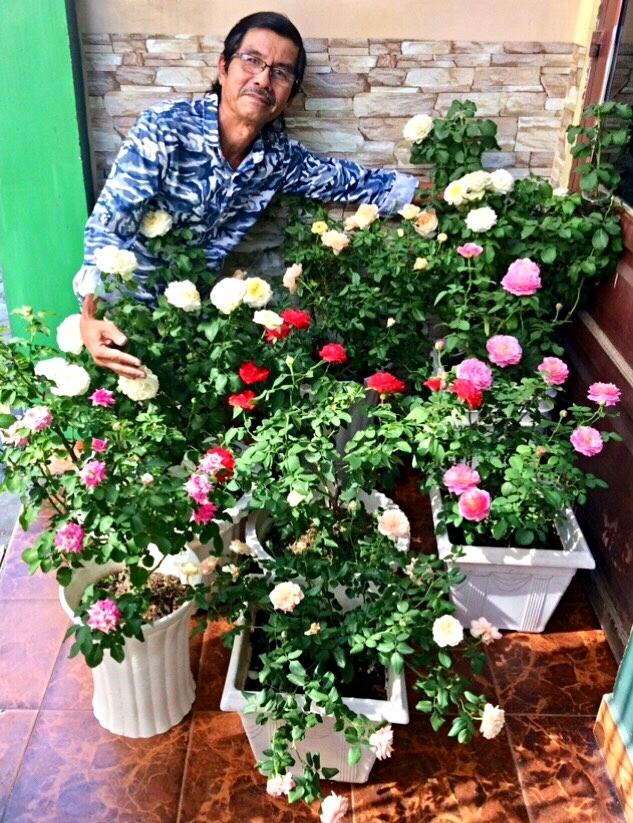 Người đàn ông trồng 100 chậu hoa hồng trên mái tôn để tặng vợ