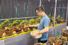 Ông chủ 2 vườn lan ở Hòa Bình chia sẻ bí quyết thành công