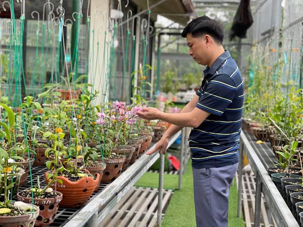 Cơ duyên bất ngờ với hoa của ông chủ vườn lan Phú Thọ