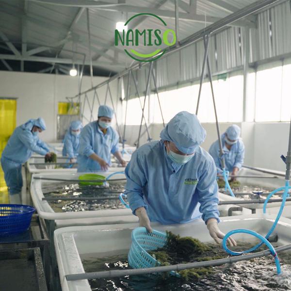 Thêm nhiều cơ hội kinh doanh với sản phẩm rong nho Namiso Organic Food