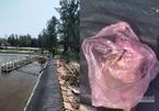 54 vạn con tôm giống chết trắng hồ, nghi bị đầu độc thuốc sâu