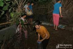 Trắng đêm đào đất săn ve sầu non về làm món nhậu