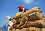 It needs objective remarks for rice export decline
