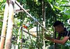 Vườn 60m2 đủ loại rau trái, vợ chồng trẻ ở Quảng Nam không phải đi chợ
