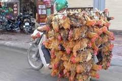FAO và WHO Việt Nam khuyến nghị về cúm A(H5N8)