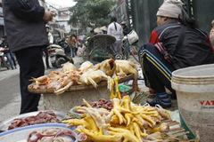 Cảnh báo nguy cơ lây nhiễm cúm gia cầm từ việc giết mổ gà, vịt tự phát