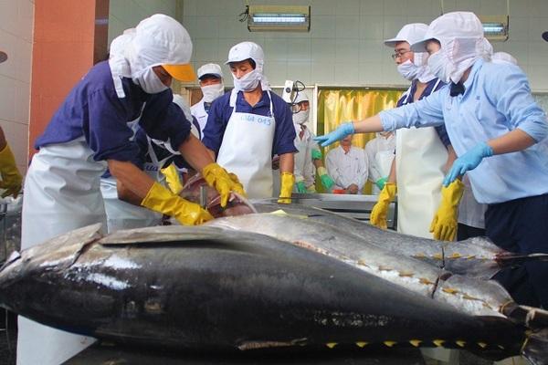 Làng biển thu 1.000 tỷ đồng mỗi năm nhờ đi săn loài cá 'khủng'