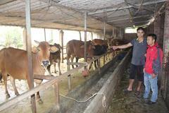 Lào Cai phát triển gia súc an toàn sinh học theo mô hình nuôi nhốt