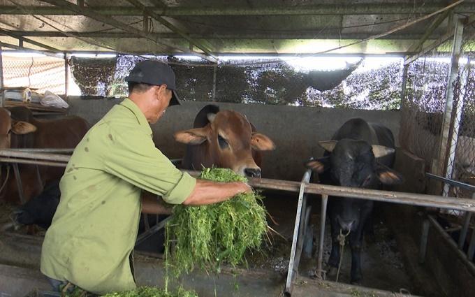 Thái Bình cấp gần 300 nghìn liều vaccine phòng bệnh vụ xuân hè 2021 cho vật nuôi