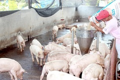 Chăn nuôi theo hướng an toàn để ngành chăn nuôi hạn chế dịch bệnh, phát triển ổn định