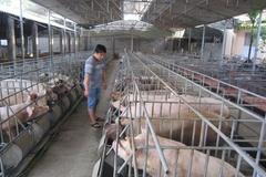 Chăn nuôi sinh học góp phần tạo vành đai xanh an toàn dịch bệnh cho đàn gia súc