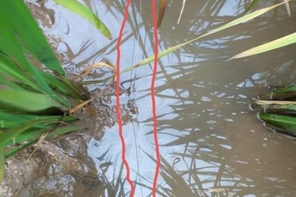 Thanh niên đi bắt cua, vấp trúng dây điện bẫy chuột tử vong ở Thái Bình