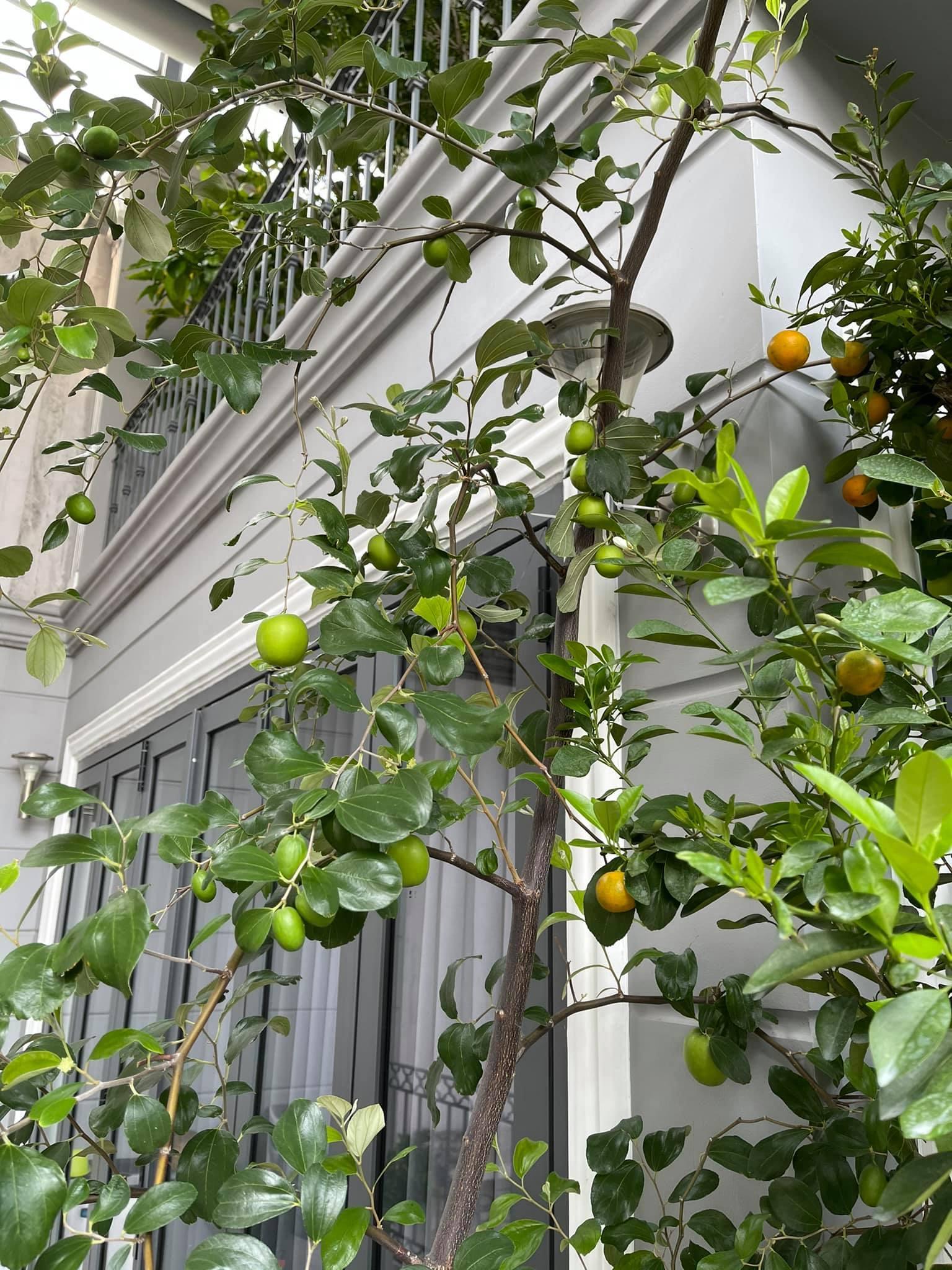 Nhà phố với giàn cây thẳng đứng, hoa trái quanh năm rực rỡ