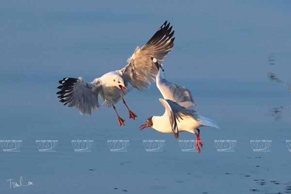 photo exhibition,endemic birds,vietnam birds