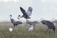 Photos of endemic birds in Vietnam on display