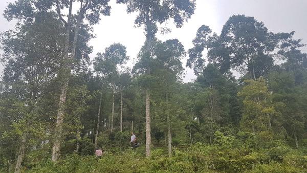 Bắc Kạn dẫn đầu cả nước về tỷ lệ che phủ rừng
