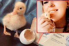 Người phụ nữ ấp vịt con làm thú cưng từ trứng mua trong siêu thị