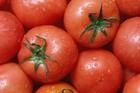 Chọn cà chua tươi ngon, mọng nước chỉ cần nhắm vào duy nhất điểm này