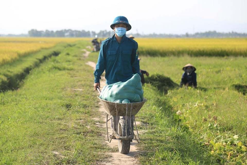 Cán bộ đổ ra đồng thu hoạch dưa giúp bà con bị phong tỏa vì dịch