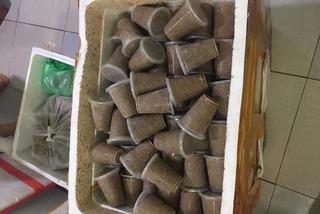 Cua đá, cua đồng xay sẵn đông lạnh bán la liệt, giá rẻ đáng sợ