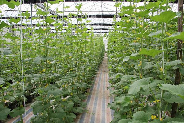 Bắc Kạn tái cơ cấu nông nghiệp theo hướng bền vững