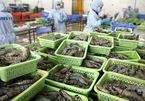 Một tổ thường trực bán giúp dân hàng trăm tấn nông sản/ngày
