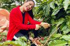Cô gái bỏ nhà phố, xe sang ở Sài Gòn về quê cuốc đất làm nông dân