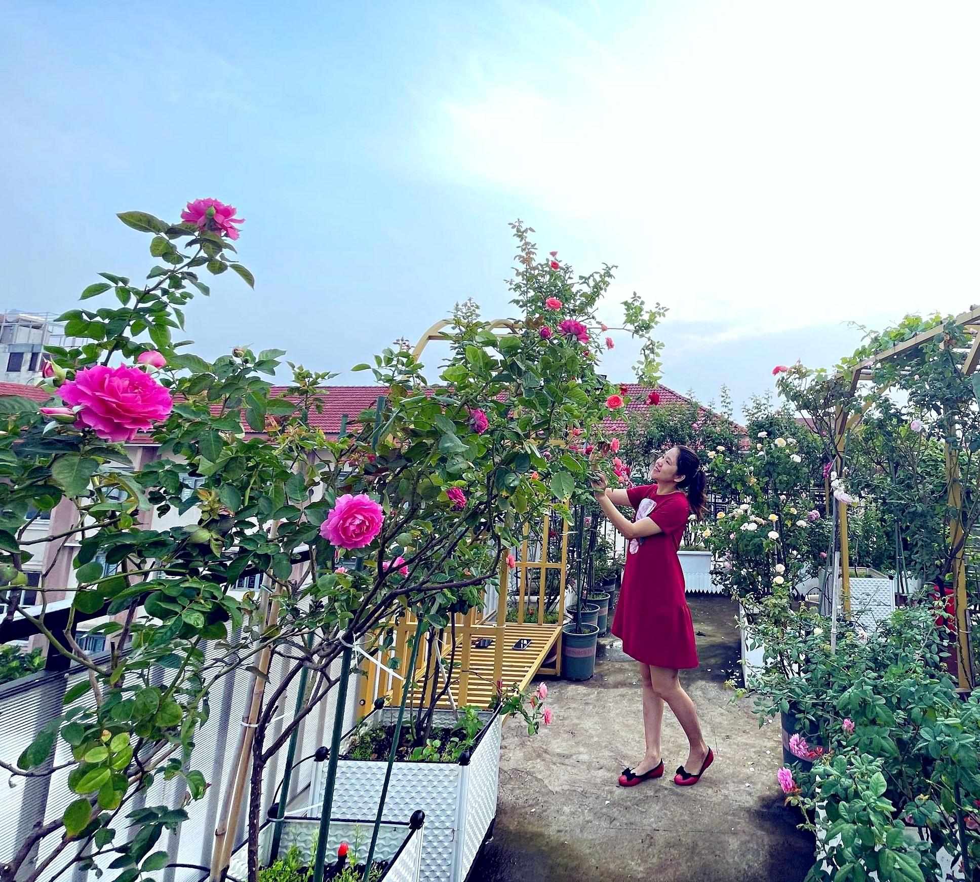 Mẹ bầu biến sân thượng thành vườn hồng rực rỡ giữa Sài thành