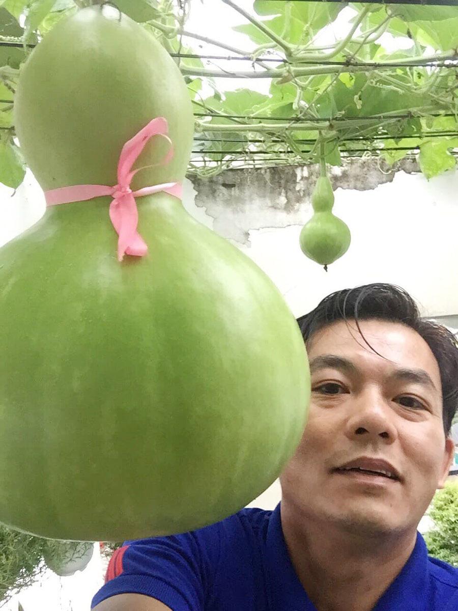 Bí đao'khổng lồ' nặng hơn 34 kg trên vườn sân thượng