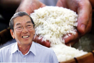 From humble start to world's best rice